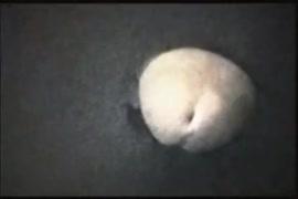 Ver videos de chicas del vachiyerato desnudas